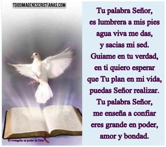 Imagenes De Palomas Cristianas